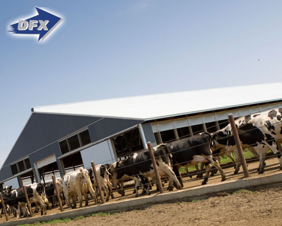 Prefabricated Light Steel Structural Design Cattle Farm Agricultural Building for Dairy Barn Unit pictures & photos