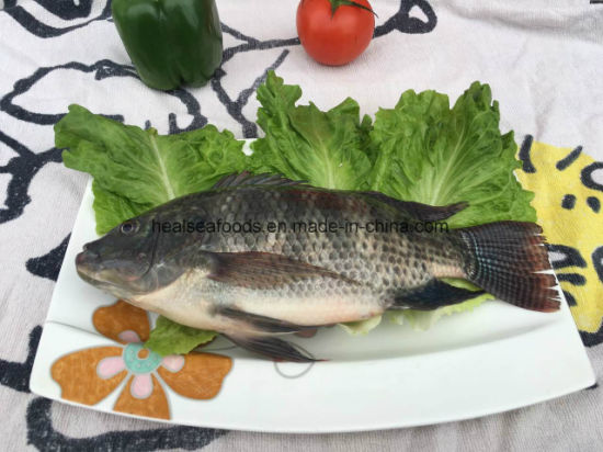 Frozen Black Tilapia Fish From China
