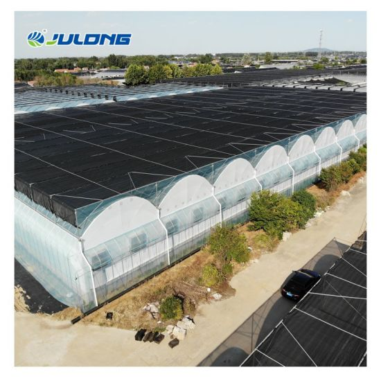 Complete Film Agricultural Greenhouse Turnkey Project with Tomato Hydroponic System
