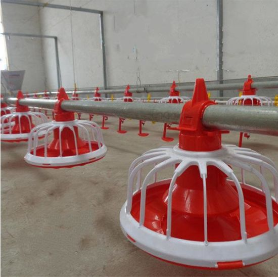 China Zimbabwe Cheap Price Chicken Farm Automatic Poultry Feeder And Drinker System For Broilers China Broiler Feeding System Price Of Broiler Feeder
