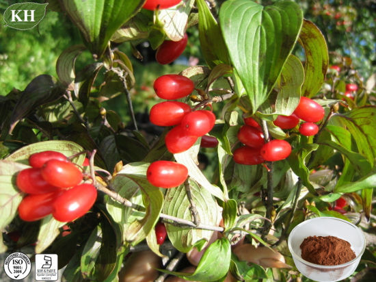 Fructus Corni Fruit Extract; Dogwood Fruit Extract 7% Loganin; 10: 1 pictures & photos