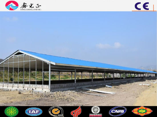 New Type House Design Broiler Poultry Farm