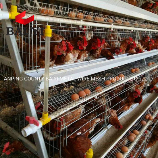 Chicken Wire Mesh Poultry Battery Cages for Sale in