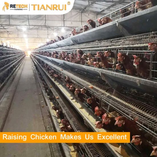 Poultry Farm Layer Chicken Egg Laying Hens Battery Cages System for Sale