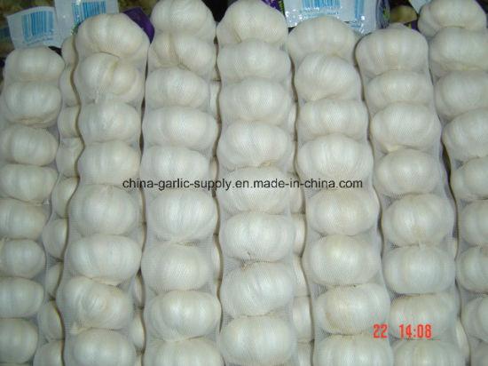 2018 New Crop Fresh Sack Export White Garlic with Mesh Bag