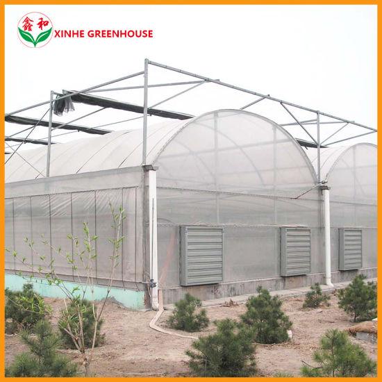 Intelligent Plastic Film Greenhouse with Hot Galvanized Structure