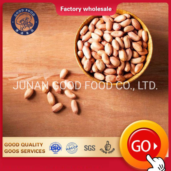 Top Quality Indian Raw Bold Peanut on Global Hot Sale for Worldwide Buyers
