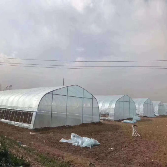 Agricultural 8 M Width 3 M Top High Vegetable and Flower Planting Single Frozen Film Greenhouse