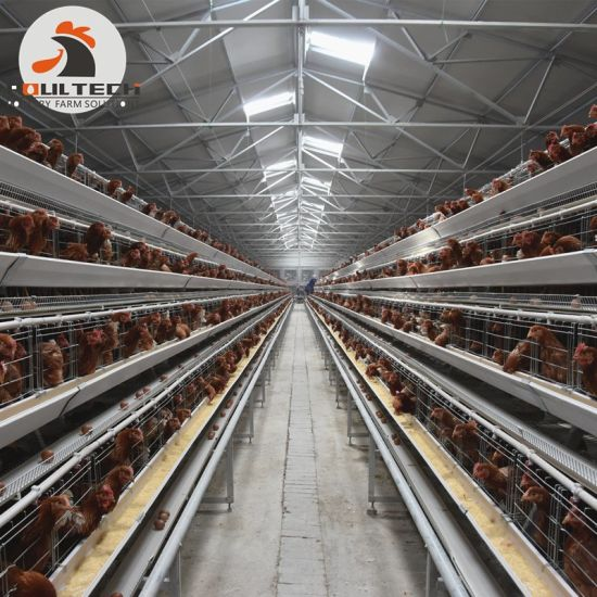 Philippines Chicken Farm 3-4 Tiers a Type Battery Egg Chicken Cage with Feeding Machine pictures & photos
