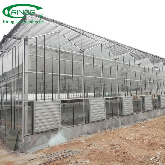 Agricultural lettuce hydroponics glass Greenhouses for growing
