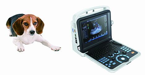 K6 Vet Portable Ultrasound Scanner pictures & photos