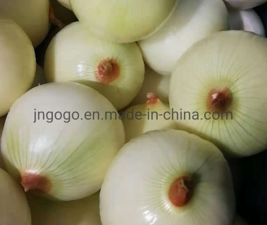 Fresh Peeled Onion (Yellow onion and red onion) pictures & photos