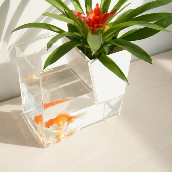 Shenzhen Colorful Cloud Acrylic Products Co. Ltd. & China Qcy Factory Direct Prices Creative Transparent Fish ...
