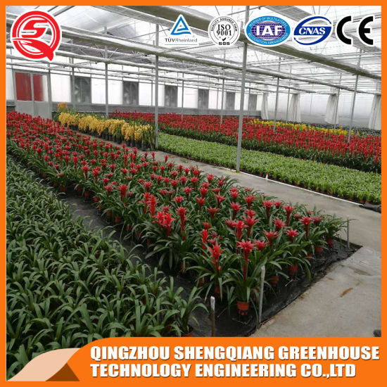 China Multi-Span Flower/ Vegetable Toughened Glass Greenhouse pictures & photos