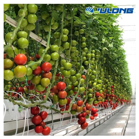 Solar Greenhouse Commercial Hydroponics System Tunnel Plastic Film Greenhouse for Tomatoes Vegetables Planting