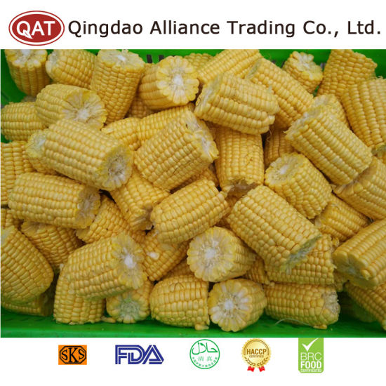 Top Quality Frozen Sweet Corn Cobs for Exporting