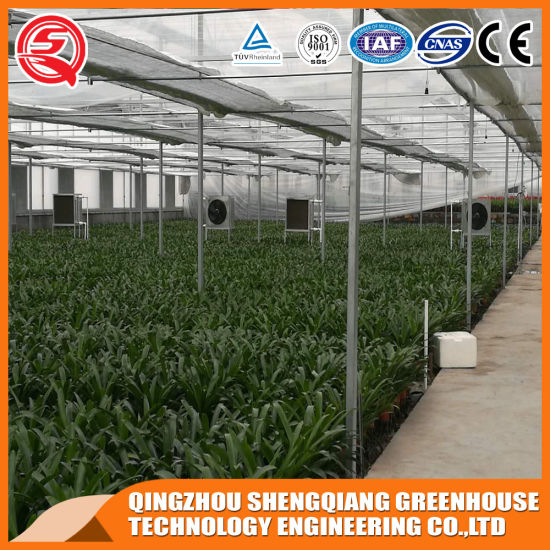 China Multi-Span Flower/ Vegetable Toughened Glass Green House pictures & photos