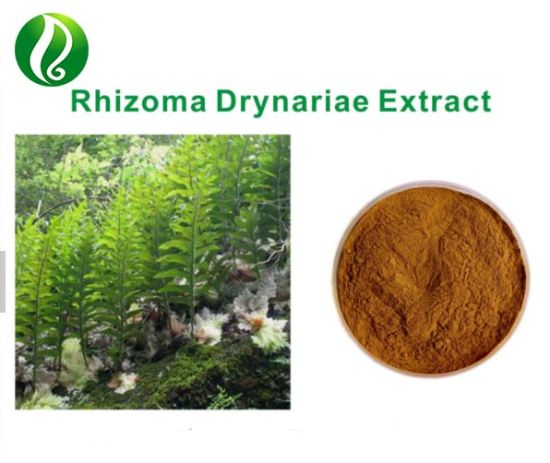 Joint Health Supplement Rhizoma Drynaria Extract Powder Naringin pictures & photos