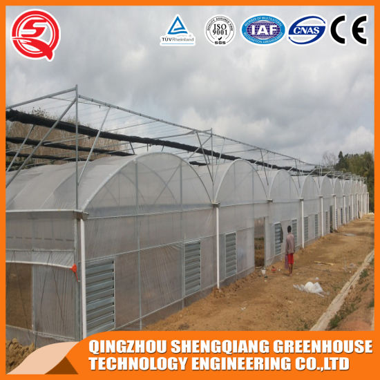 Agriculture Productive Plastic Film Garden Greenhouse with Hydroponic System
