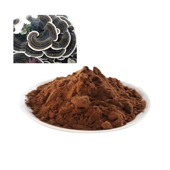 Coriolus Versicolor Trametes Versicolor Turkey Tail Mushroom Extract Polysaccharide 30%-60%