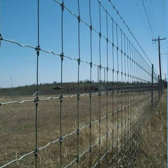 High Security Cattle Fence / Grassland Fence / Deer / Horse / Sheep pictures & photos