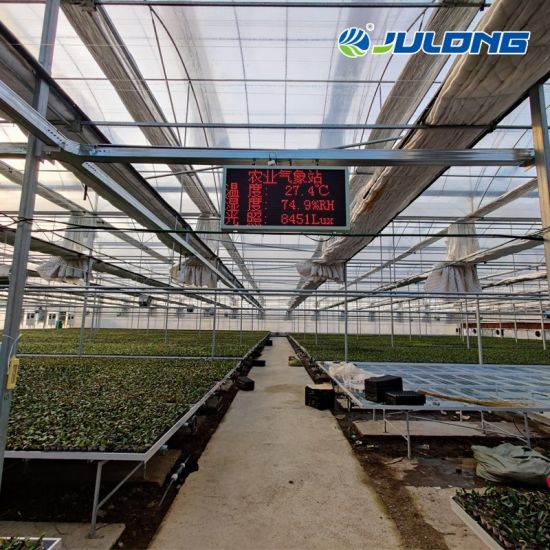 Customized Multi-Span Greenhouse for Agriculture Nft Systems and Vertical Vegetable Farming