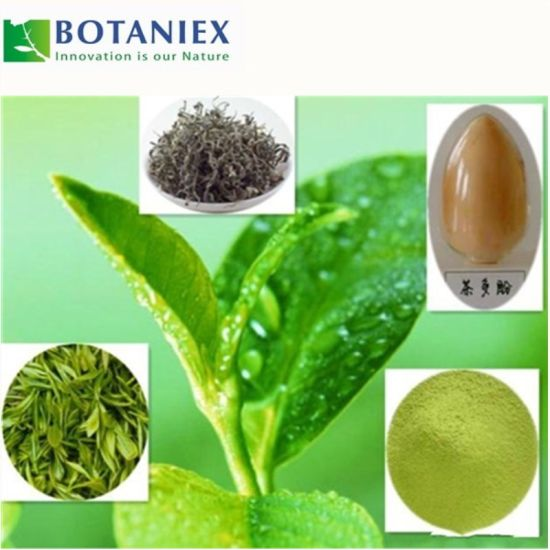 China Anti-Cancer Green Tea Extract L-Theanine for Food
