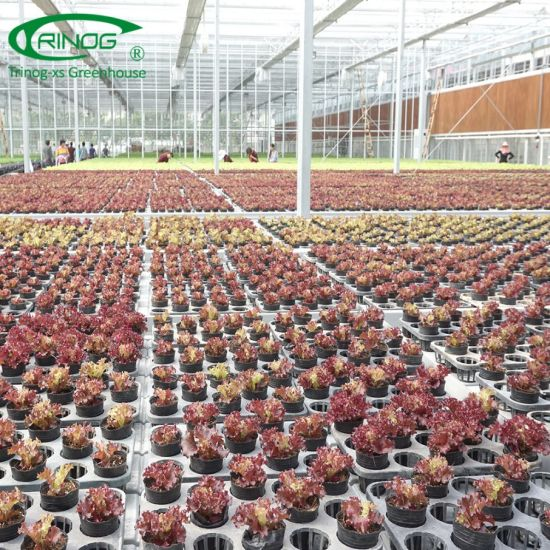 Industrial flower Glass Greenhouse for commercial farm
