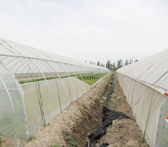 Single Spanplastic Film Agriculture Green House for Tomatoes/Flowers