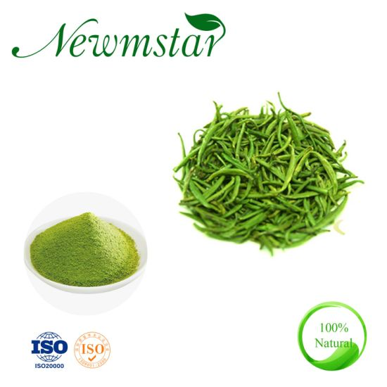 Vietnam Organic Cultivation Matcha Green Tea Extract Powder