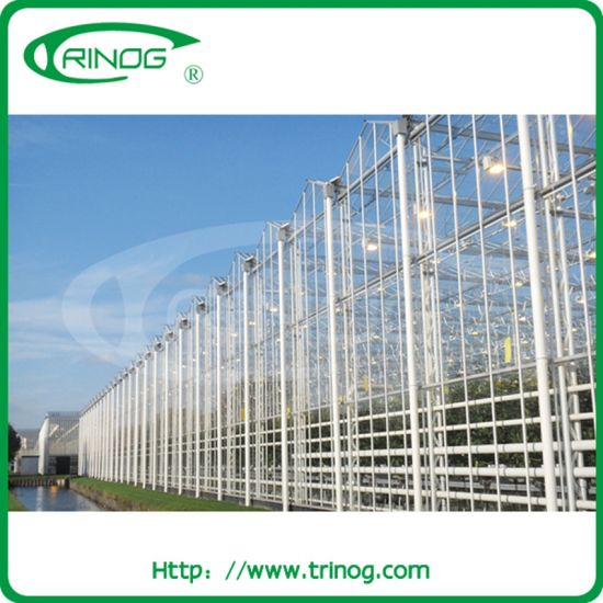Industrial venlo glass greenhouse for vegetables