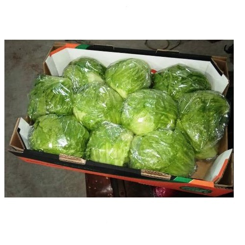 Cheapest Price Iceberg Lettuce High Quality pictures & photos
