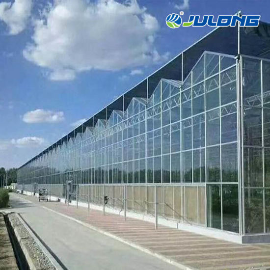 Factory Price New Technology Venlo Type Glass Greenhouse with Cooling Pad Steel Frame for Green House Cooling