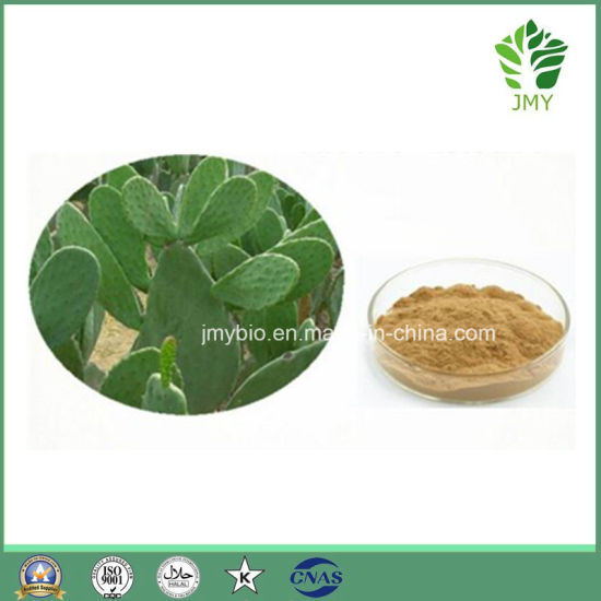 China Best Quality Factory Price Hoodia Cactus Extract Hoodia