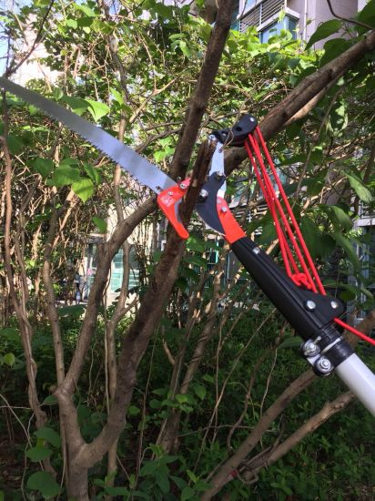 Tree Pruner and Saw Garden Tools for Branches Cutter