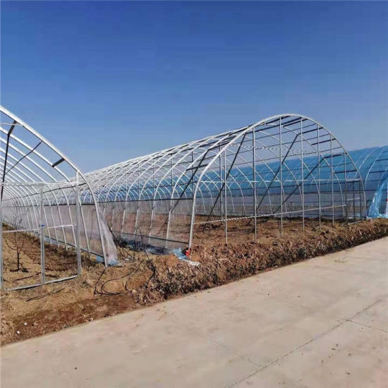 Large Multi-Span Commercial Monomer Greenhouse