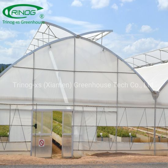 4mm gutter height poly film greenhouse with Trinog Design