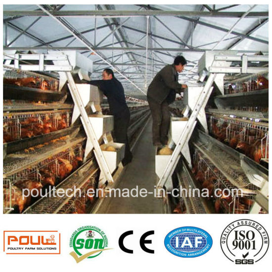 Poultry Farm Equipment Chicken Cage System