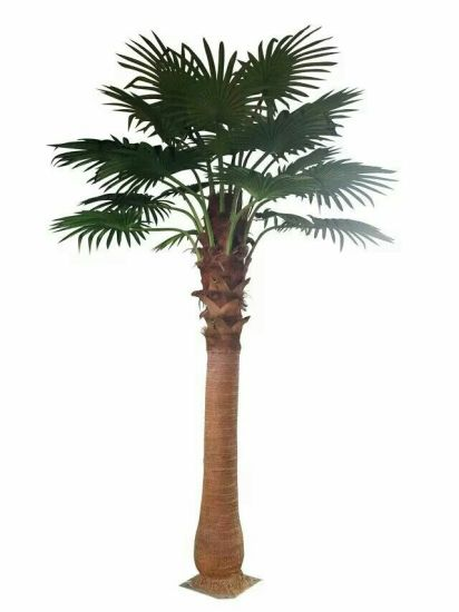 Artificial Plants and Flowers of Fan Palm 2.8m 18lvs pictures & photos