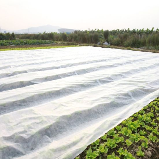 100% PP Agriculture PP Customized Spunbond Nonwoven Fabric/SMS Non Woven/PP Spunbond Nonwoven Fabric pictures & photos