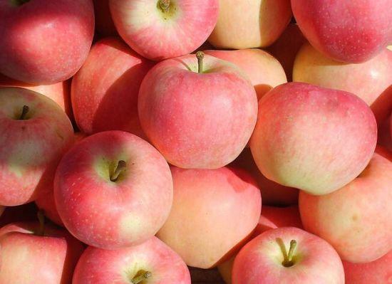 Fresh Chinese Yantai Paper Bagged FUJI Apples with Carton
