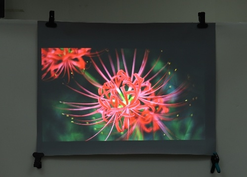 1.52X2m Transparent Rear Projection Film /3D Holo Foil /for Museums with Best Angle