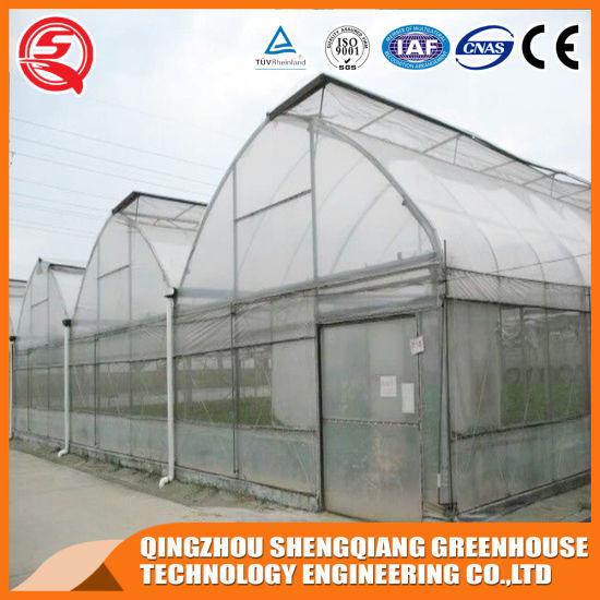 Agriculture Multi Span Vegetable Garden Plastic Green House