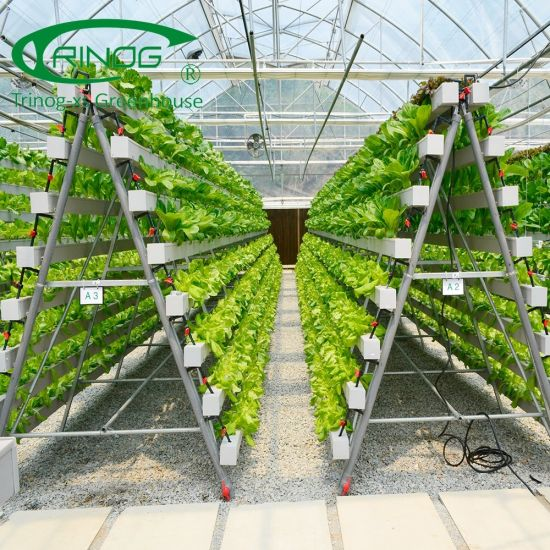 Advanced commercial vertical hydroponics system growing ...