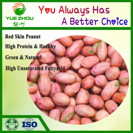 New Crop Agriculture Food Peanut Premium Quality of Chinese Red Skin Peanut with 10% Discount