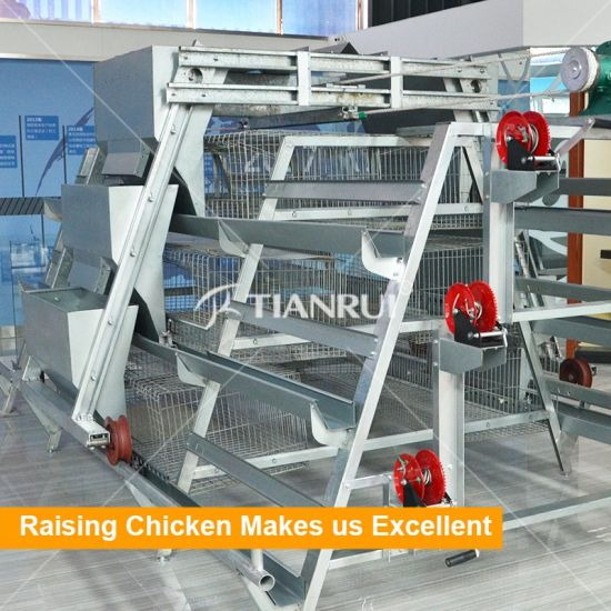 Full automatic poultry farm equipment one day old chicken cage with nipple drinking system