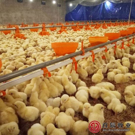 Poultry Farm Equipment Broiler Nipple Drinking System