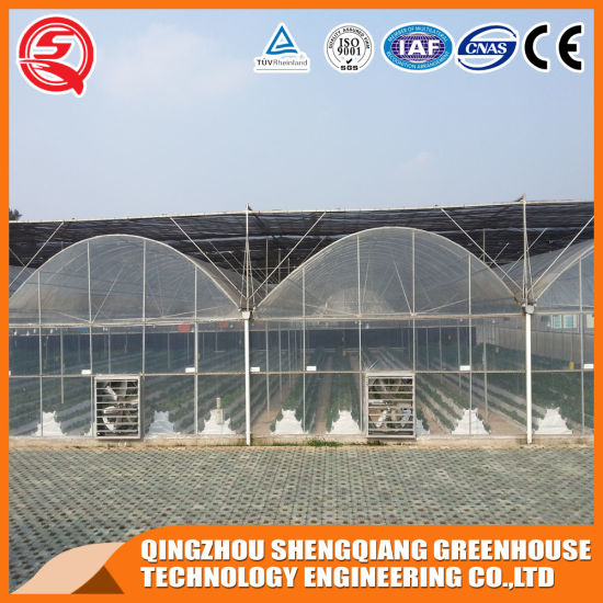 Agriculture Productive 10m Multi-Span Agriculture Plastic Film Garden Greenhouse Hydroponic