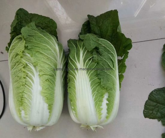 Fresh Chinese/Napa Cabbage pictures & photos
