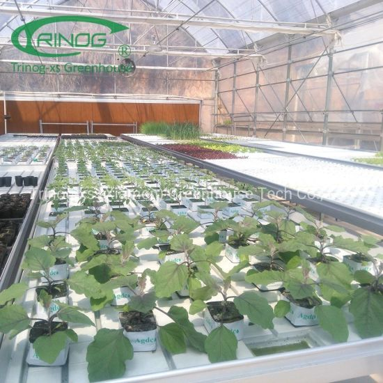 Ebb and Flow tray bench hydroponics system for seedling